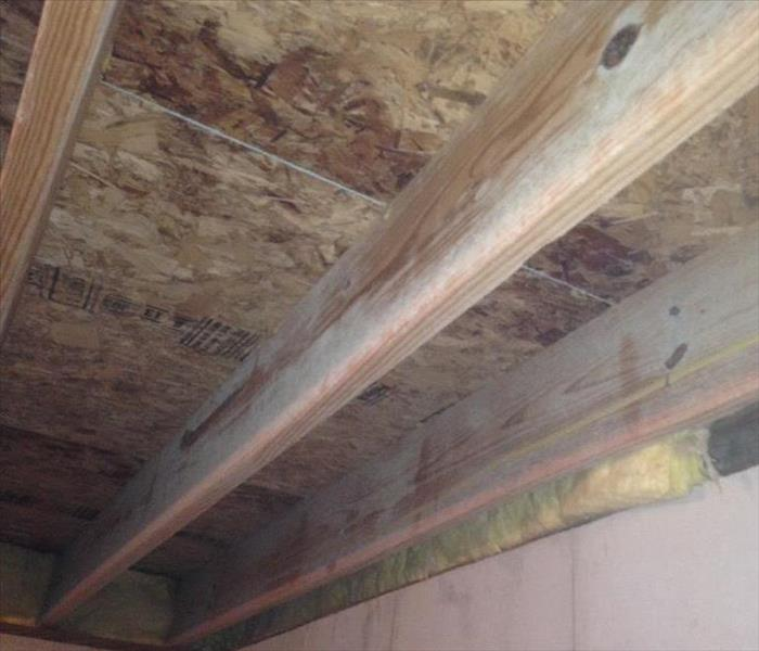 Mold on floor joists